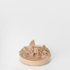 Hender Scheme – science vase:化瓶- 「 petri dish L 」